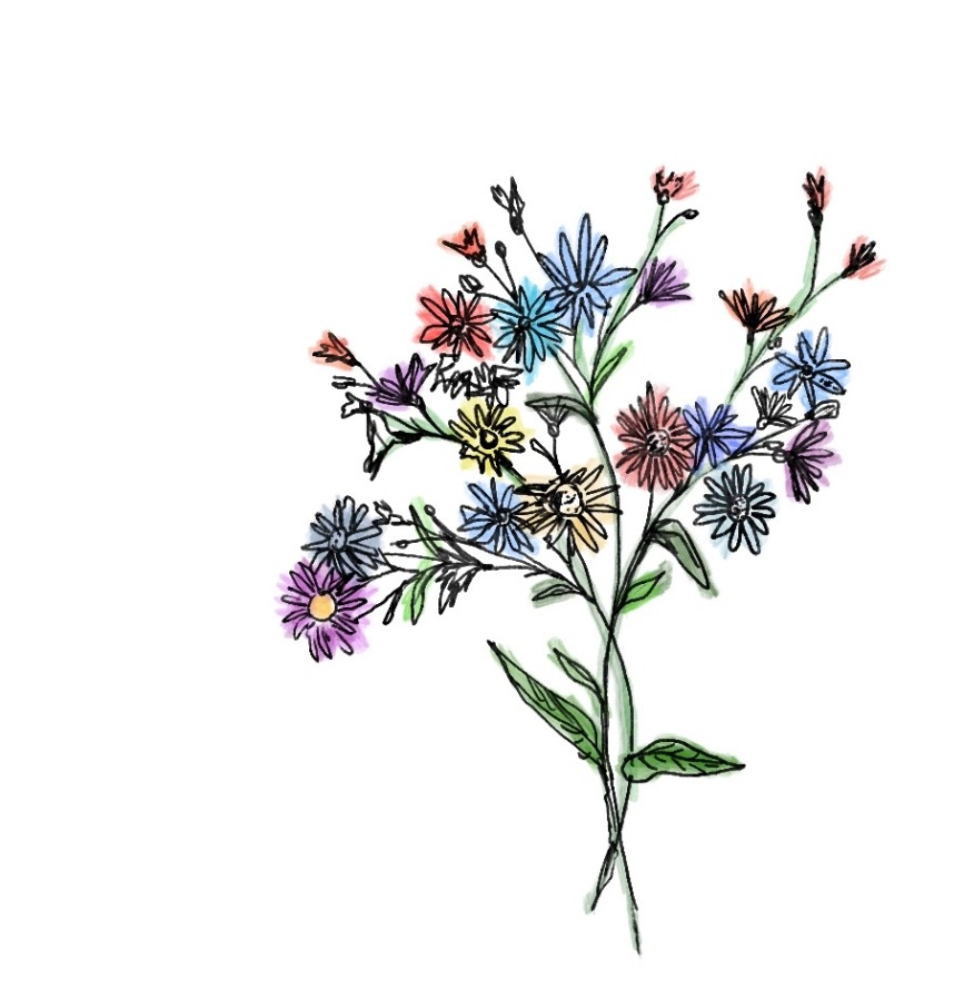 Bunch of wildflowers illustration by Silva Brindle @silvasoup on Instagram